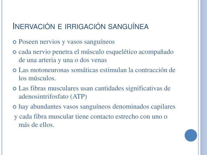 Inervación e irrigación sanguínea