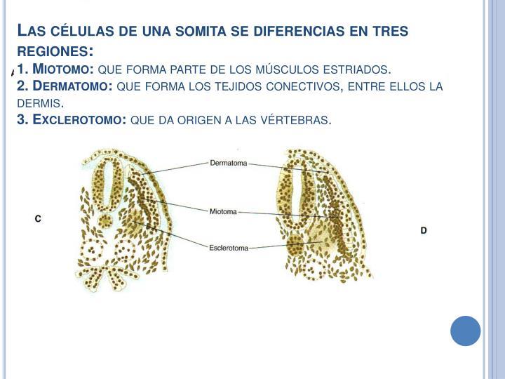 Las células de una