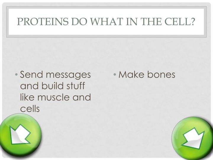 Proteins do what in the cell?