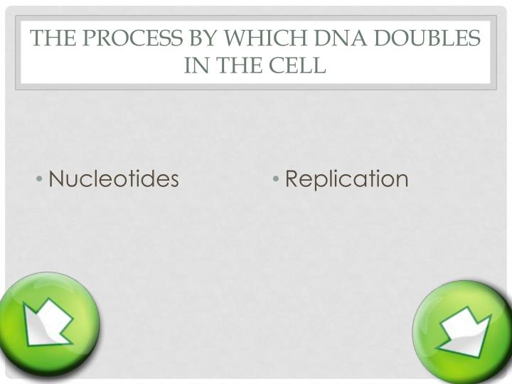 The process by which DNA doubles in the cell