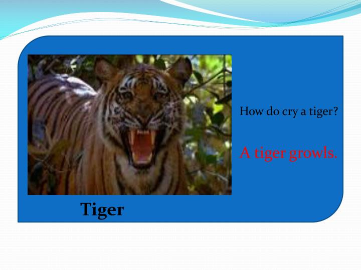 How do cry a tiger?