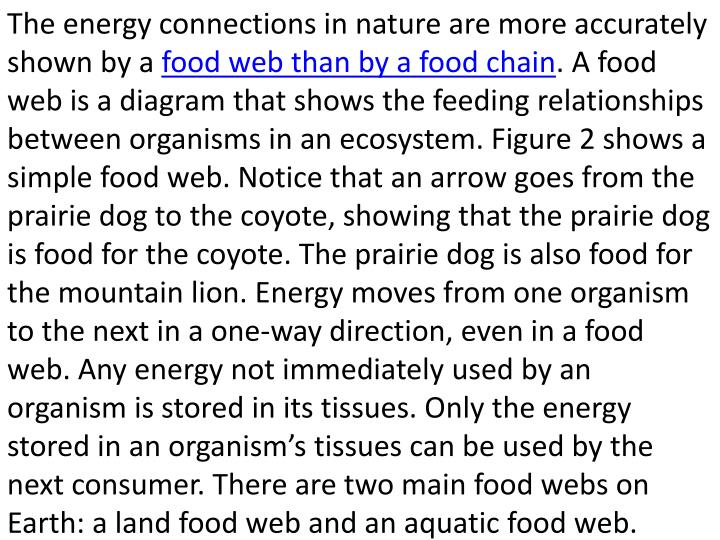 The energy connections in nature are more accurately shown by a