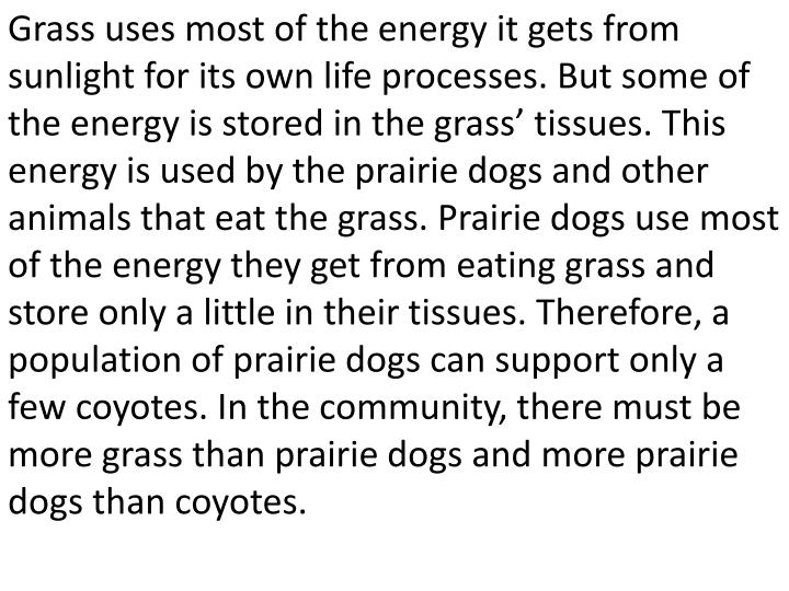 Grass uses most of the energy it gets from sunlight for its own life processes. But some of the energy is stored in the grass' tissues. This energy is used by the prairie dogs and other animals that eat the grass. Prairie dogs use most of the energy they get from eating grass and store only a little in their tissues. Therefore, a population of prairie dogs can support only a few coyotes. In the community, there must be more grass than prairie dogs and more prairie dogs than coyotes.