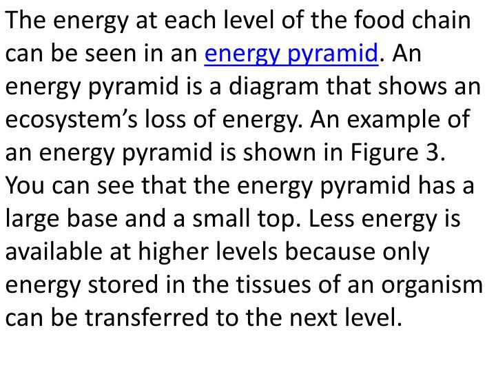 The energy at each level of the food chain can be seen in an