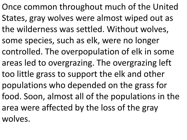 Once common throughout much of the United States, gray wolves were almost wiped out as the wilderness was settled. Without wolves, some species, such as elk, were no longer controlled. The overpopulation of elk in some areas led to overgrazing. The overgrazing left too little grass to support the elk and other populations who depended on the grass for food. Soon, almost all of the populations in the area were affected by the loss of the gray wolves.