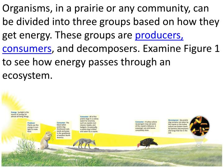 Organisms, in a prairie or any community, can be divided into three groups based on how they get energy. These groups are