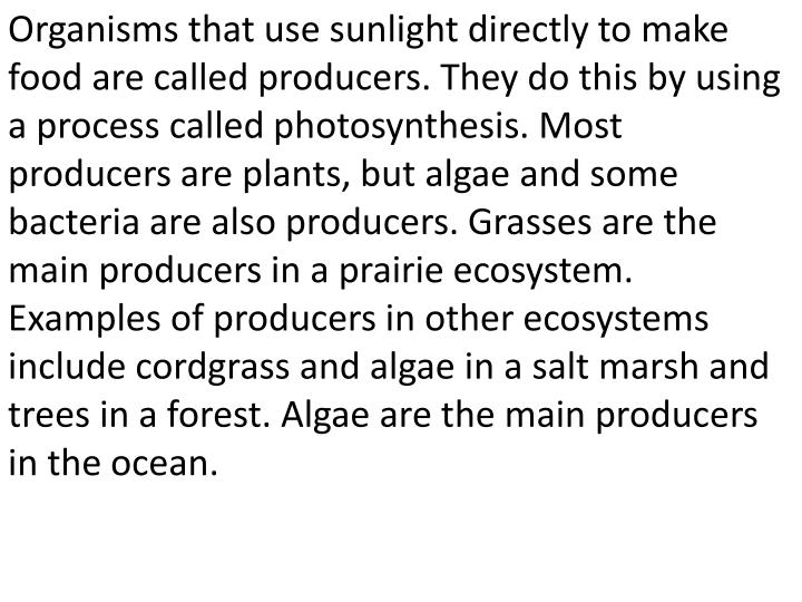 Organisms that use sunlight directly to make food are called producers. They do this by using a process called photosynthesis. Most producers are plants, but algae and some bacteria are also producers. Grasses are the main producers in a prairie ecosystem. Examples of producers in other ecosystems include