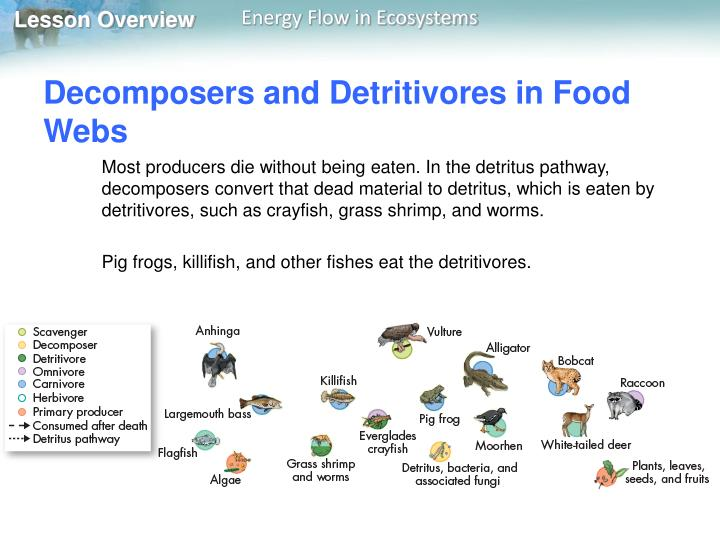 Decomposers and Detritivores in Food Webs