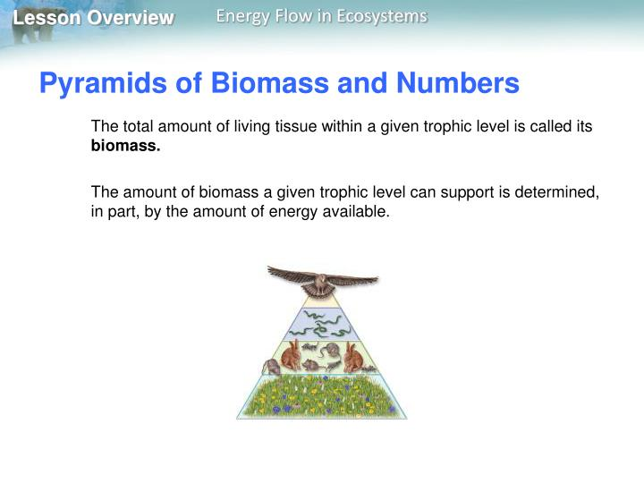 Pyramids of Biomass and Numbers
