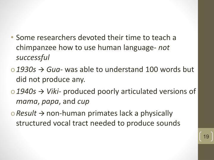 Some researchers devoted their time to teach a chimpanzee how to use human language-