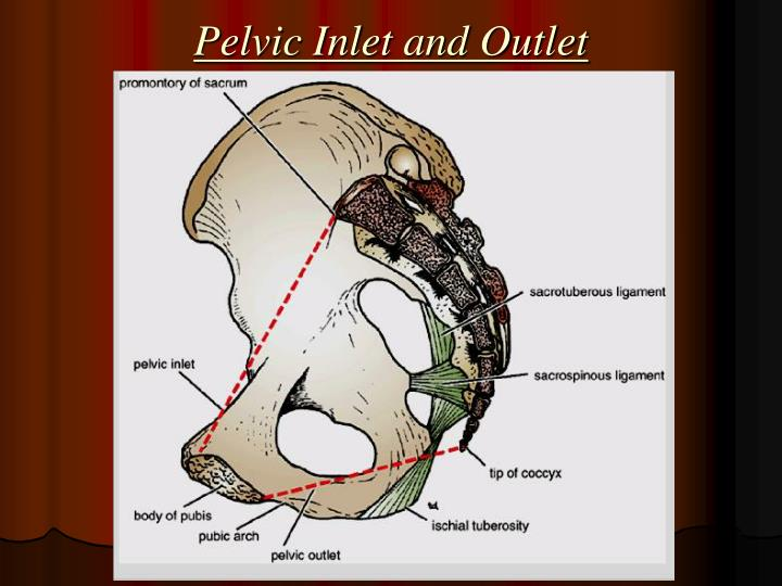 Pelvic Inlet and Outlet