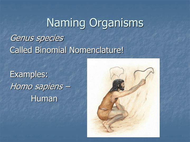 Naming Organisms