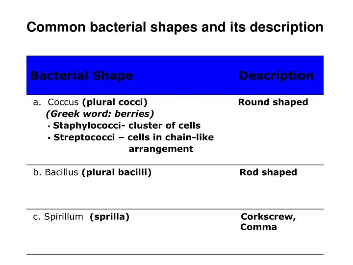 Common bacterial shapes and its description