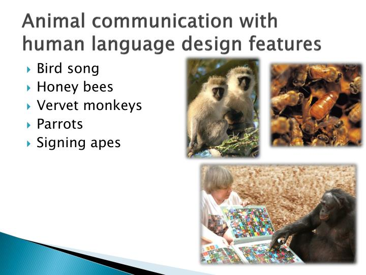 Animal communication with human language design features
