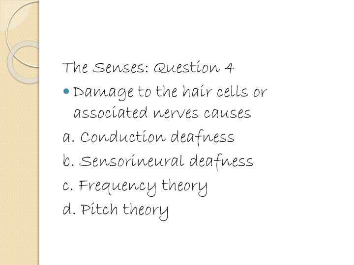The Senses: Question 4