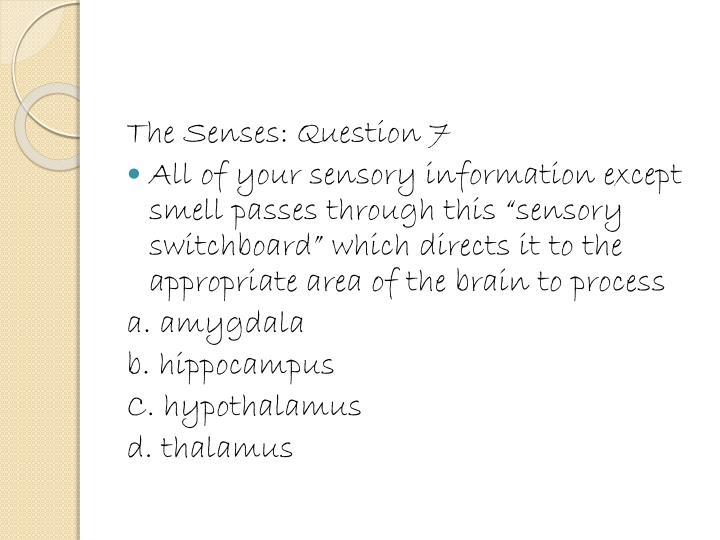The Senses: Question 7