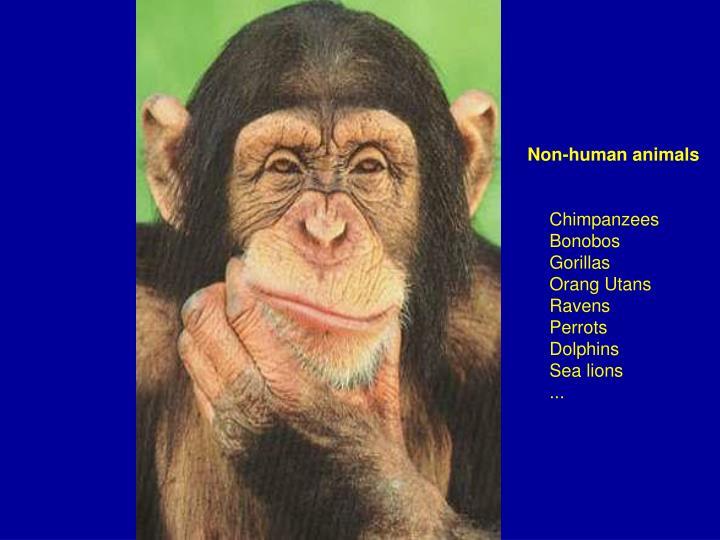 Non-human animals