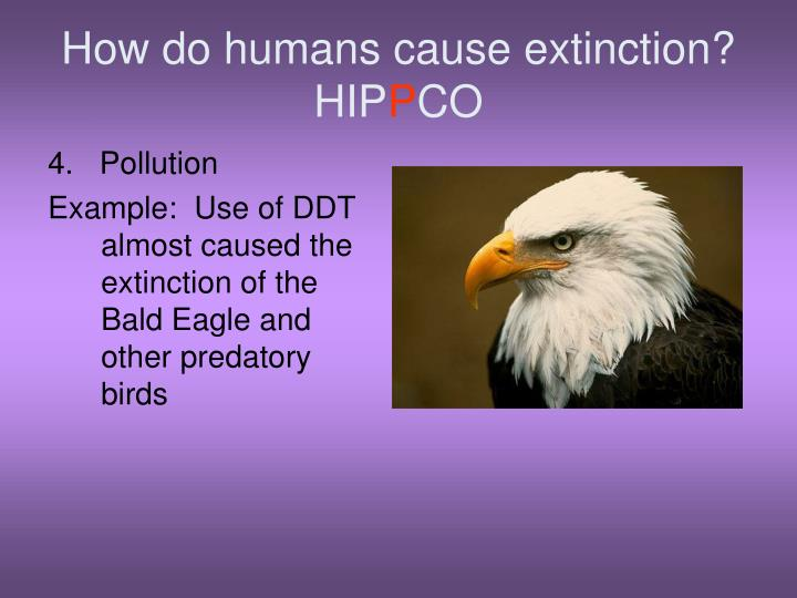 problem of the extinction of many Most americans have little idea of the magnitude of the problem although they are uncertain of the numbers, most scientists believe the rate of loss is greater now than at any time in the history of the earth within the next 30 years as many as half of the species on the earth could die in one of the fastest mass extinctions in.