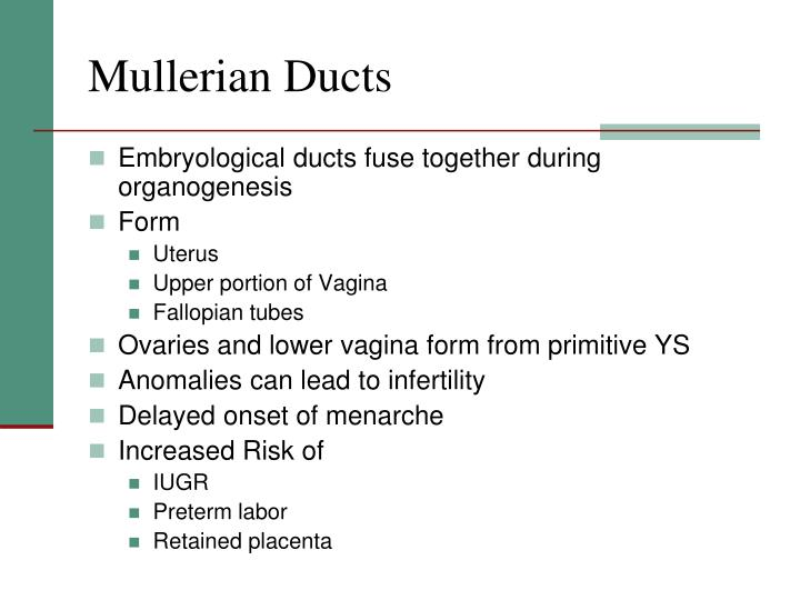 Mullerian Ducts