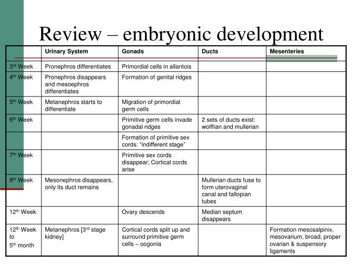 Review – embryonic development