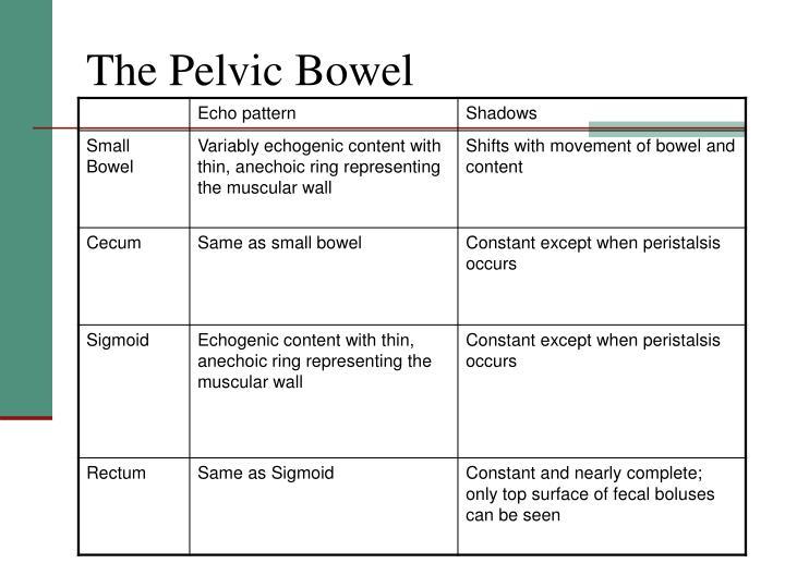The Pelvic Bowel