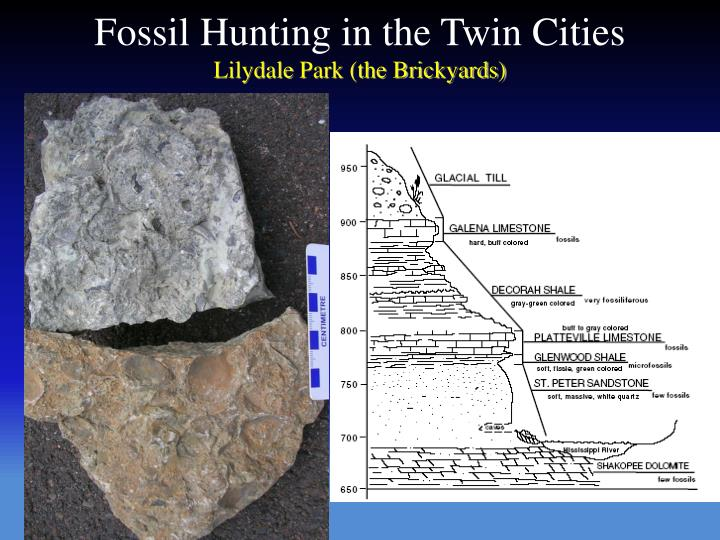 Fossil Hunting in the Twin Cities