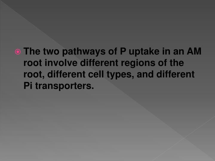 The two pathways of P uptake in an AM root involve different regions of the root, different cell types, and different Pi transporters.