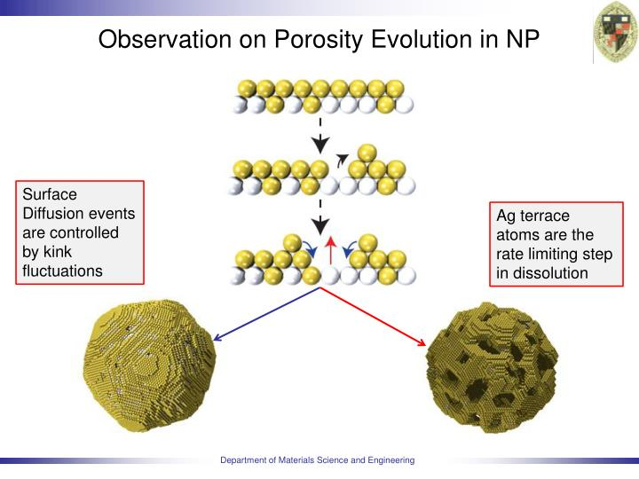 Observation on Porosity Evolution in NP