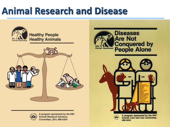 Animal Research and Disease
