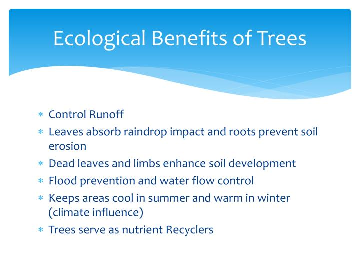 Ecological Benefits of Trees