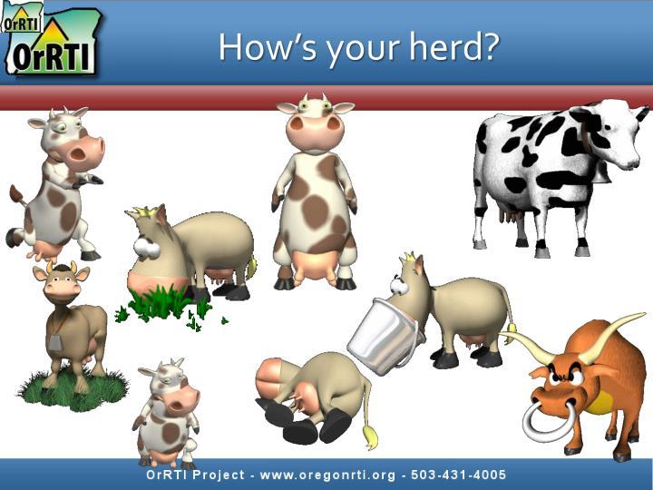 How's your herd?