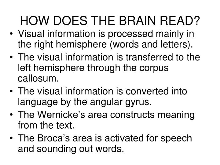 HOW DOES THE BRAIN READ?