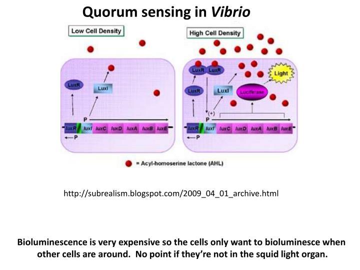 Quorum sensing in