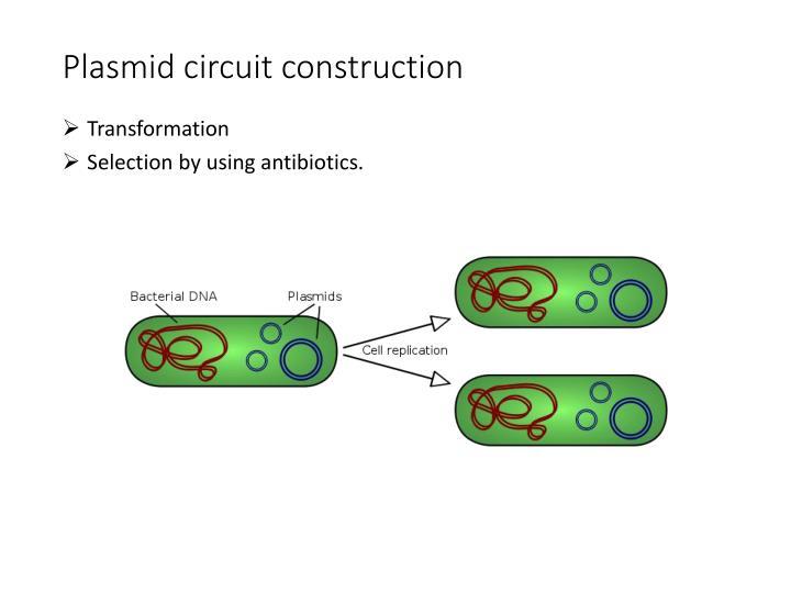 Plasmid circuit construction