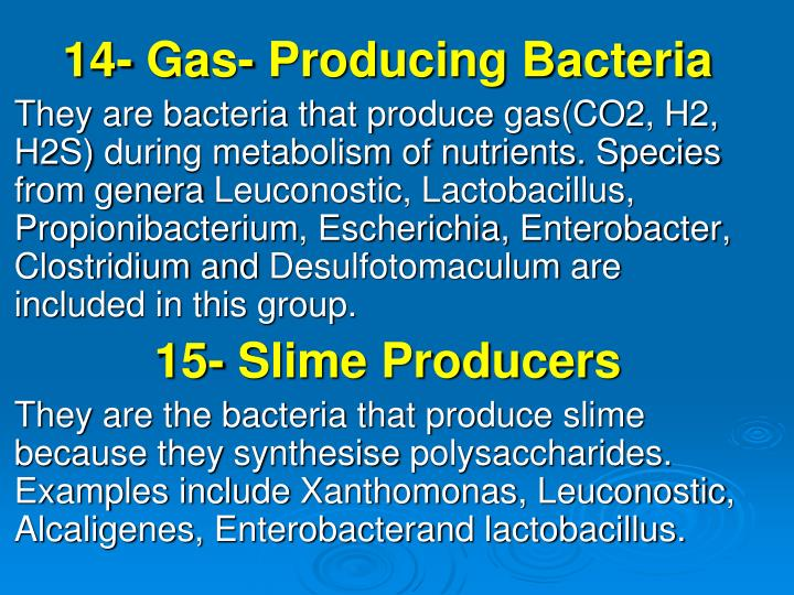 14- Gas- Producing Bacteria