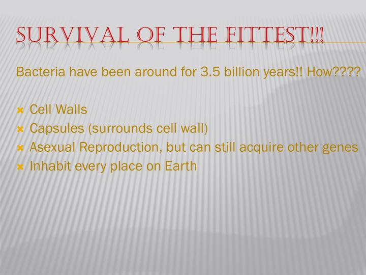 Survival of the Fittest!!!