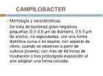 campilobacter