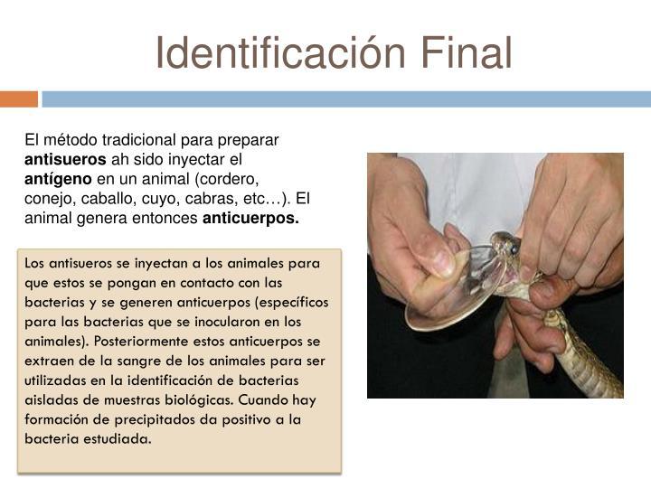 Identificación Final