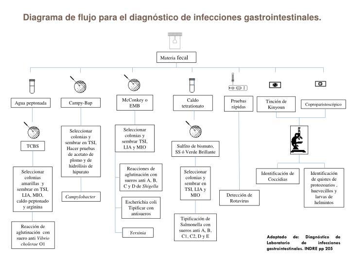 Diagrama de flujo para el diagnóstico de infecciones gastrointestinales.