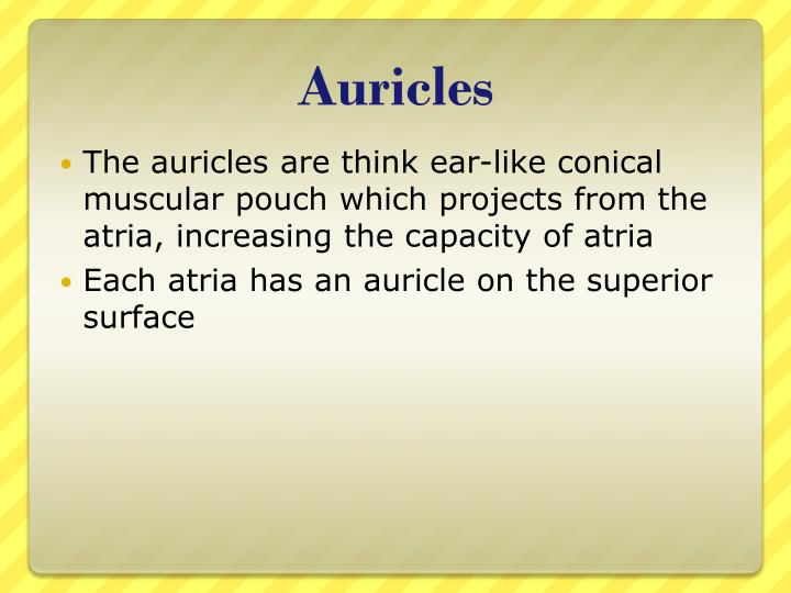 Auricles