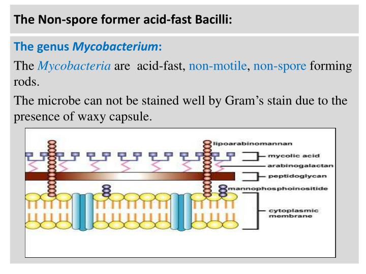The Non-spore former acid-fast Bacilli: