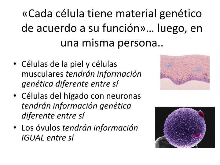 «Cada célula tiene material genético de acuerdo a su función»… luego, en una misma persona..