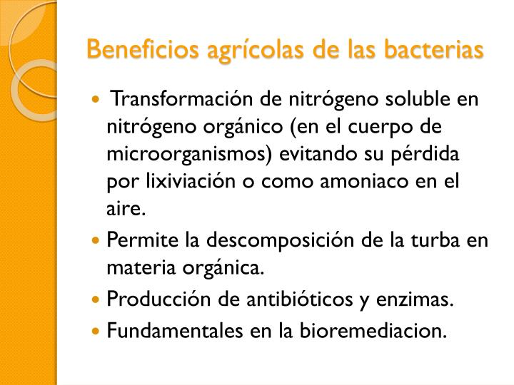 Beneficios agrícolas de las bacterias
