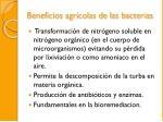 beneficios agr colas de las bacterias1