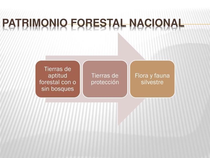 Patrimonio Forestal Nacional