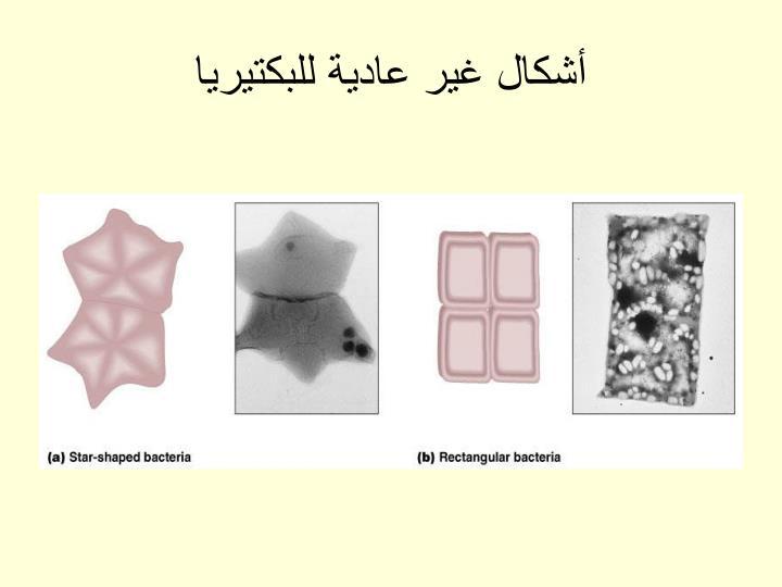 أشكال غير عادية للبكتيريا