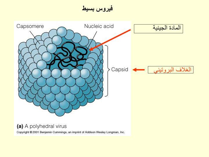فيروس بسيط
