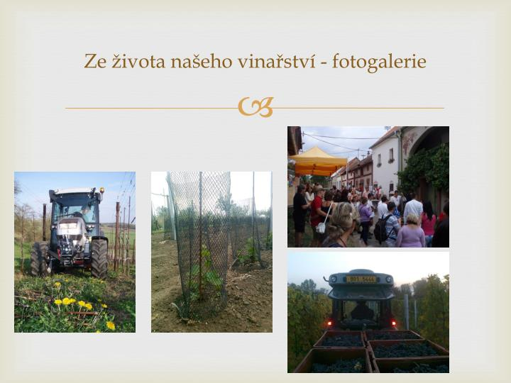 Ze života našeho vinařství -