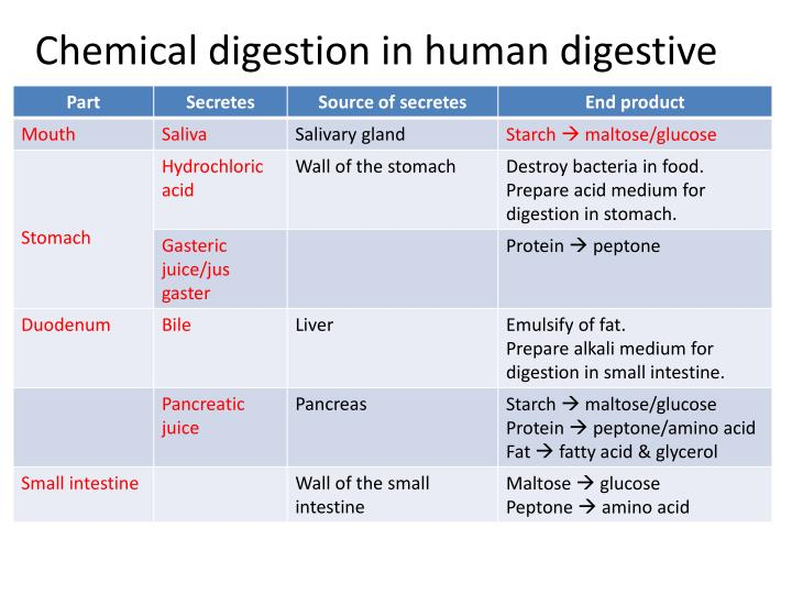 Chemical digestion in human digestive