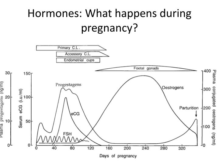 Hormones: What happens during pregnancy?